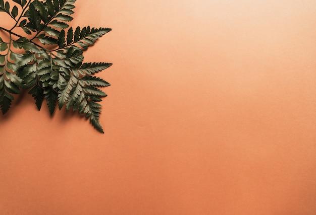 色の壁に熱帯の緑の葉