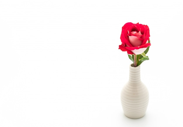 Красная роза на белом фоне