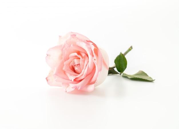 Розовые и белые розы