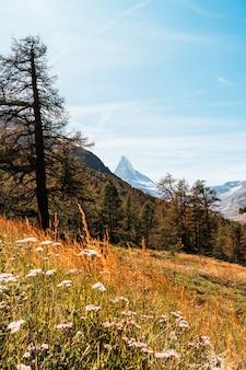 スイス、ツェルマットのマッターホルンピークを望む美しい山の風景。