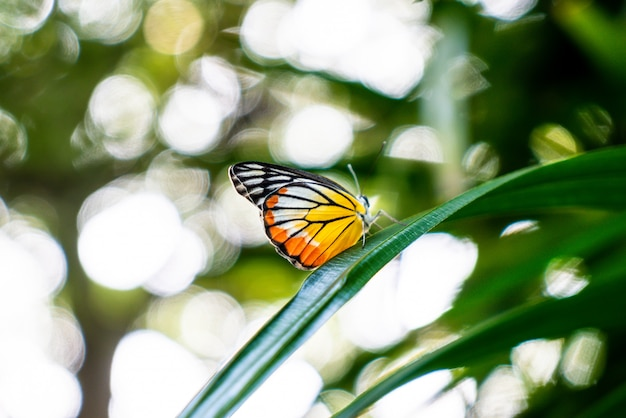 木の上に美しい蝶