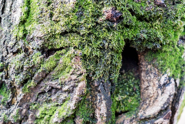 木の幹の上の苔