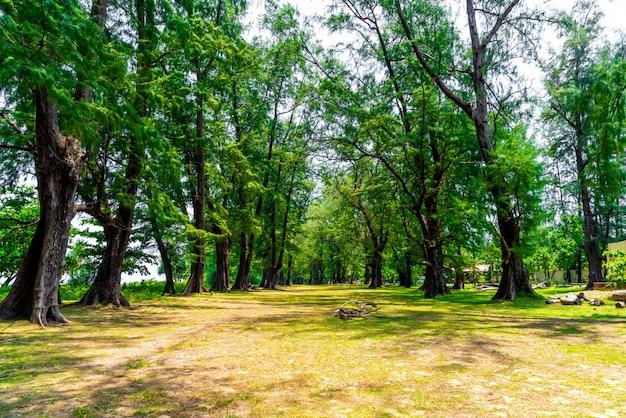 タイプーケットの国立公園の木