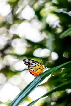 木の美しい蝶