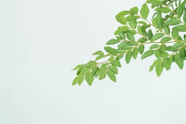 白い背景を持つ葉