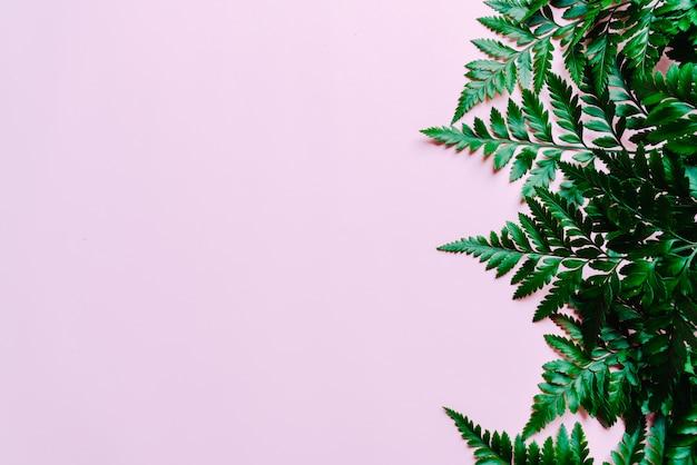 熱帯の緑の葉の色
