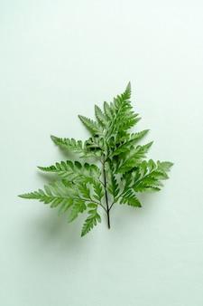 熱帯の緑の葉