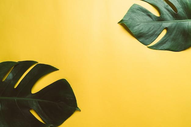 黄色の背景にモンステラの葉
