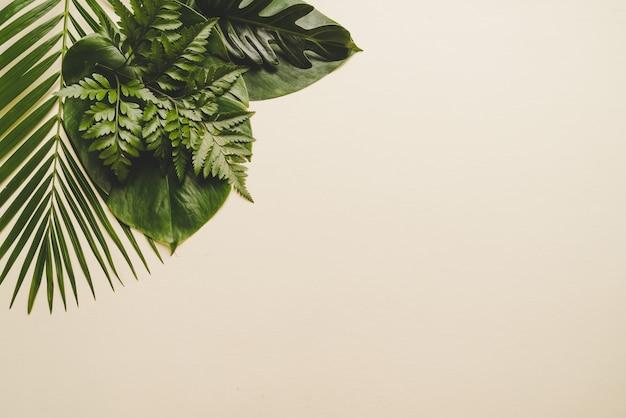 ベージュ色の背景に熱帯のヤシの葉