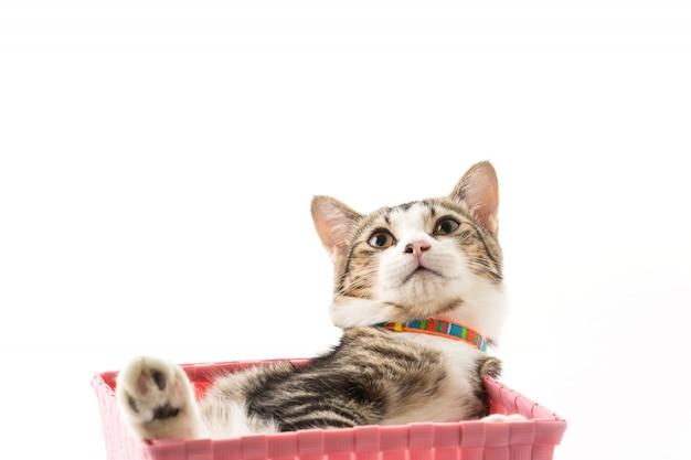 バスケットの猫