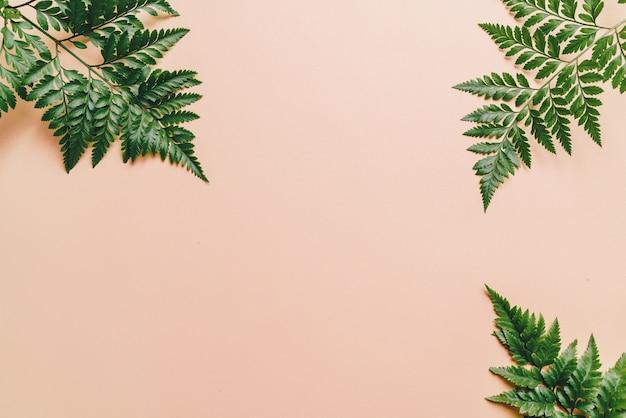 色の背景上の熱帯の緑の葉