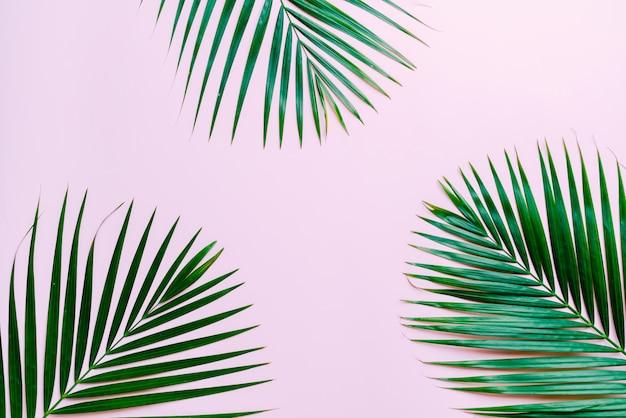 熱帯のヤシの葉の背景