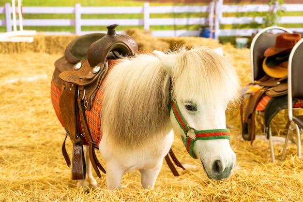ファームの白い馬