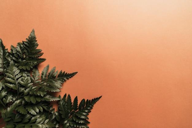 Тропические зеленые листья на цветном фоне