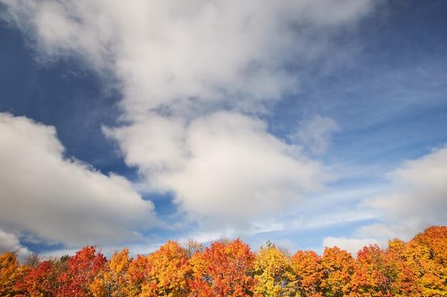青い空を背景に赤と黄色の秋の木々。秋の自然。風景。