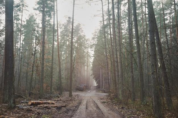伐採後の霧の森の刻んだ木。