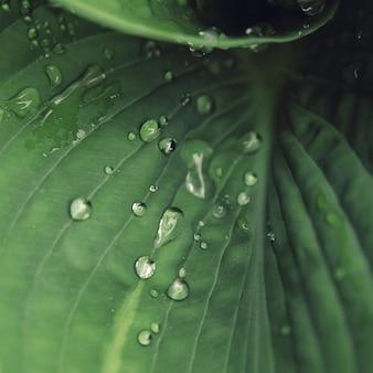 Капли воды на листе.