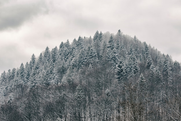 雪に覆われた森の丘。冬の風景