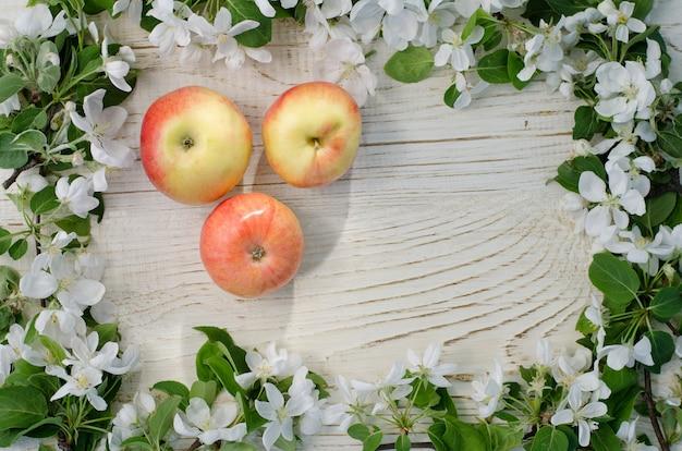 Три спелых яблока и яблоневый цвет белый,