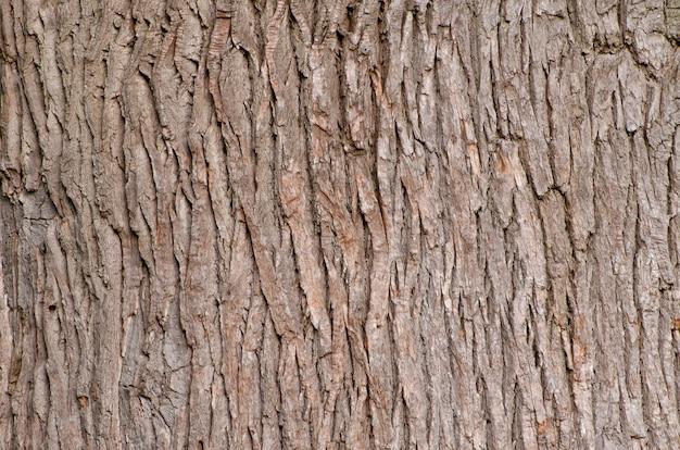 オーク樹皮。テクスチャ。閉じる