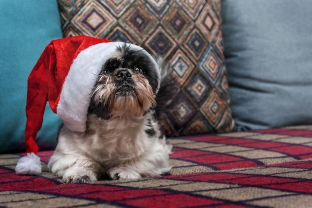 クリスマス帽子の小さな犬がソファーに座っています。