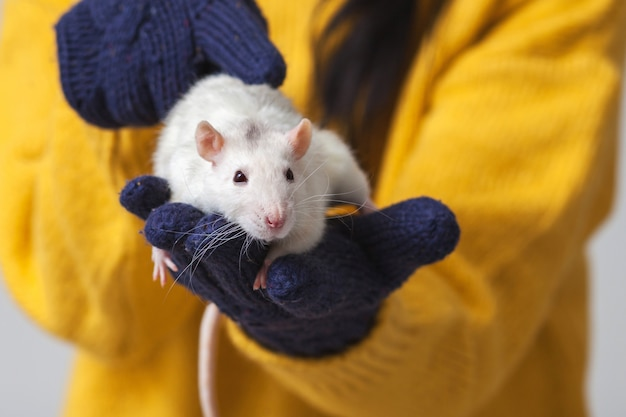 Белая крыса на руках.