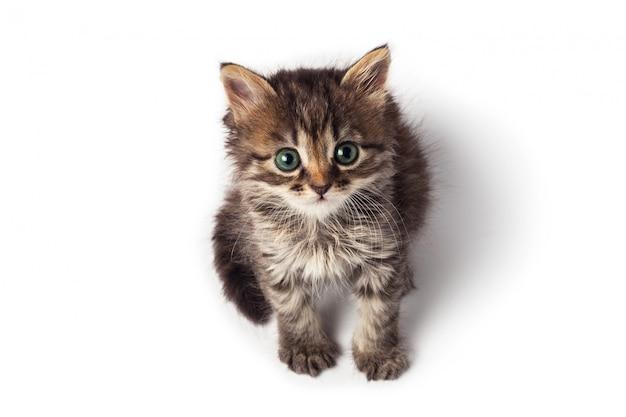Милый маленький полосатый котенок на белом фоне