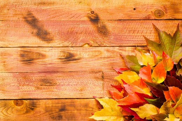 感謝祭の日紅葉背景