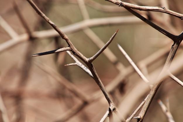 アフリカのブッシュメン村の乾燥木