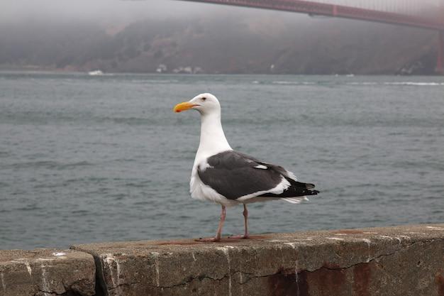 Птица закрыть мост золотые ворота в сан-франциско, сша