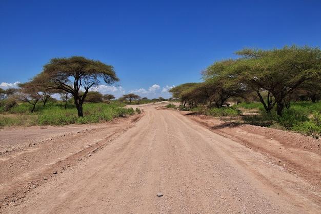 アフリカのブッシュマン村への道