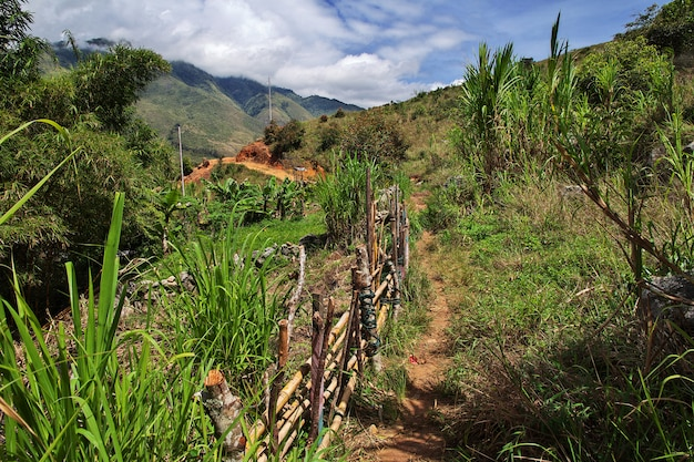 インドネシア、パプア、ワメナの谷での追跡