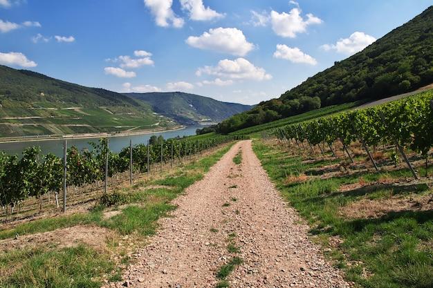 西ドイツのライン渓谷の道