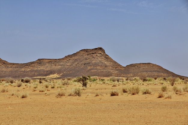 スーダンの砂漠
