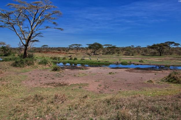 ケニアとタンザニア、アフリカのサファリのマラボウ