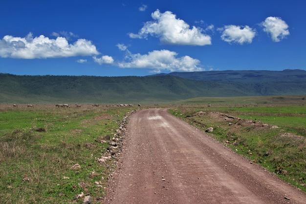 ケニアとタンザニア、アフリカのサファリ