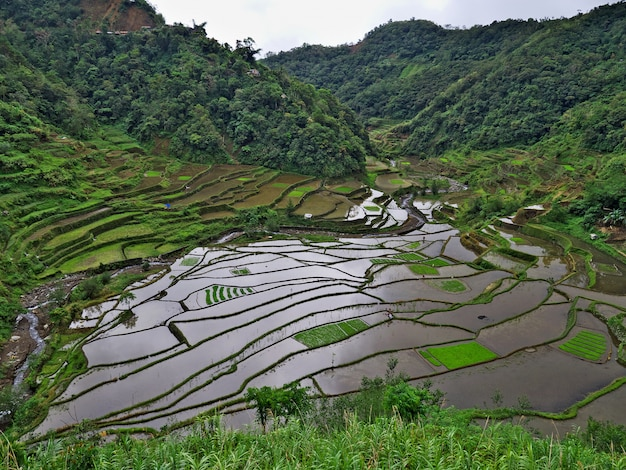 フィリピン、バナウエの棚田