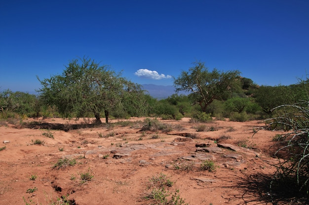Баобабы в деревне бушменов, африка