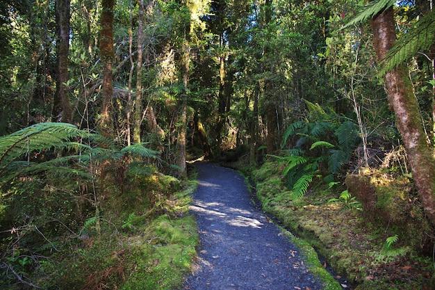 ニュージーランド南島のミラー湖