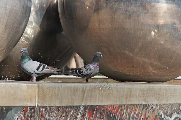 Птица в городе баку, азербайджан