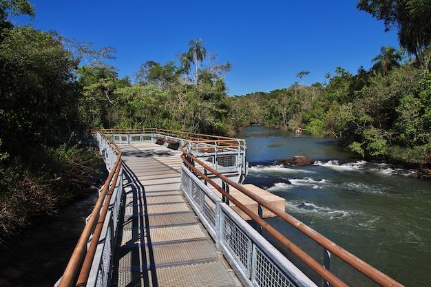 Тропический лес на игуасу падает в аргентине и бразилии