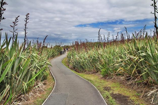 プナカイキはニュージーランド南島のパンケーキ岩