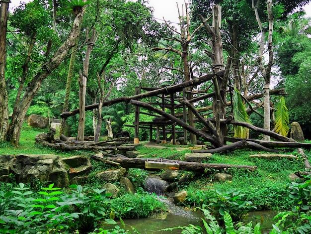 シンガポールの動物園のゴリラ