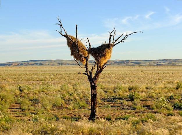 Гнездо птицы, соссусвлей, намибия