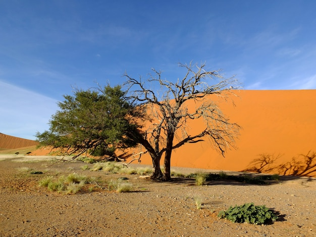 Дюны в пустыне намиб, соссусвлей, намибия