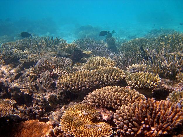 Подводное плавание на мальдивских островах
