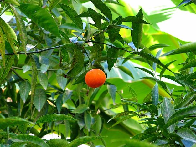 Сад в мекнесе, марокко