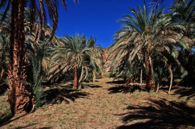 スーダン、サハラ砂漠のオアシス