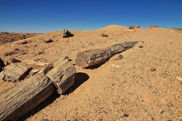 スーダン、サハラ砂漠の古代の木