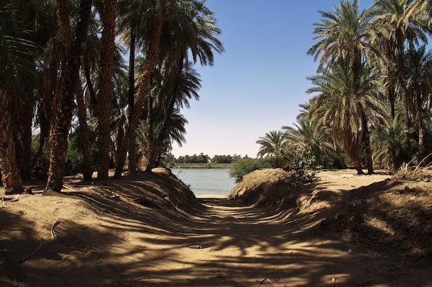 ナイル川の近くのスーダン、サイ島